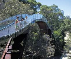 Kings Park Treetop Walk