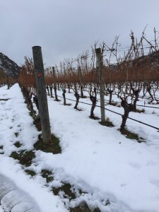 The image shows the grape vines covered with snow at Gibbston Valley Winery