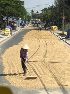 Photo of rice drying and being spread on road in Hoi An